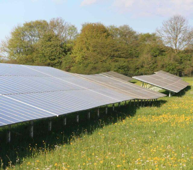 Biodiversität in Solarparks - Heimat für Tier und Pflanze