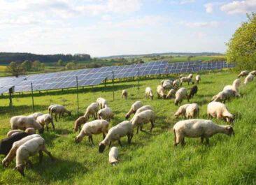 Erneuerbare Energien im Strommix: Deutschland Solar