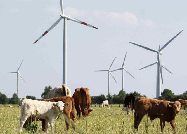 Festzins Geldanlagen - ökologisch investieren mit fester Verzinsung