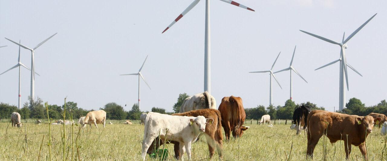 Festzins - feste Zinsen mit ökologischen Geldanlagen