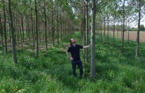 Kirifonds Deutschland von WeGrow: Kiri-Plantage in Ladenburg bei Mannheim
