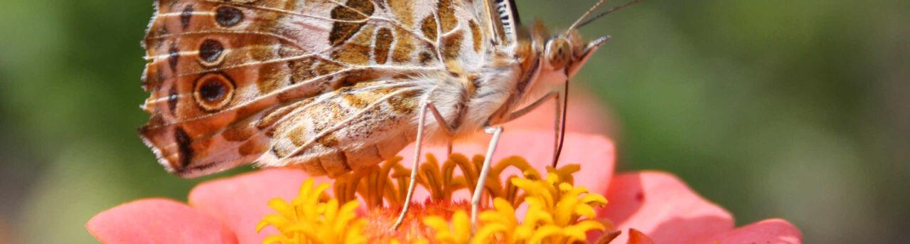 Ökologischer Versicherungscheck