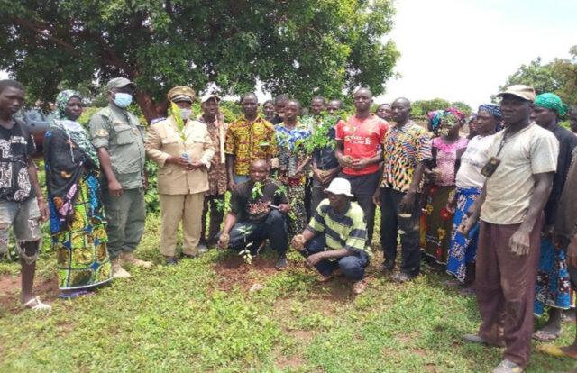 Oxfam Entwicklungsarbeit Mali - Baum-Pflanzungen