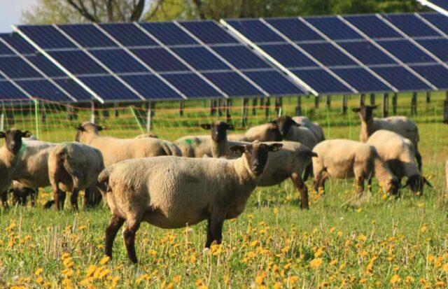 Private Equity Investitionen in Solar und Wind