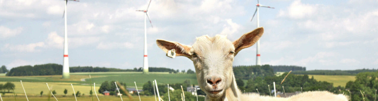 Windkraftfonds und Windpark Beteiligungen - Investition in Windkraft